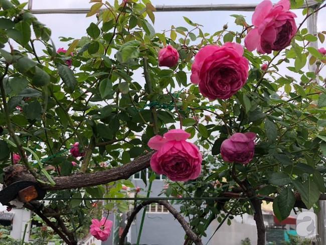 Người phụ nữ tận hưởng hạnh phúc trọn vẹn bên vườn hồng trên cao giữa lòng Hà Nội - Ảnh 1.