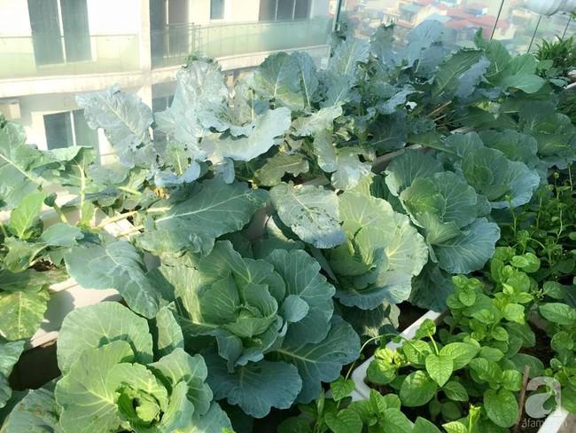 Vườn rau và hoa ở ban công với hơn 60 loại tươi tốt xanh mướt mắt của nữ dược sĩ ở Hà Nội - Ảnh 13.
