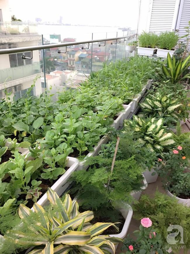 Vườn rau và hoa ở ban công với hơn 60 loại tươi tốt xanh mướt mắt của nữ dược sĩ ở Hà Nội - Ảnh 10.
