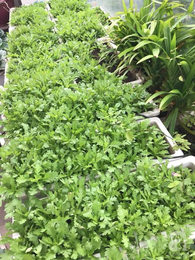 Vườn rau và hoa ở ban công với hơn 60 loại tươi tốt xanh mướt mắt của nữ dược sĩ ở Hà Nội - Ảnh 9.