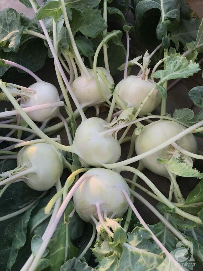 Vườn rau và hoa ở ban công với hơn 60 loại tươi tốt xanh mướt mắt của nữ dược sĩ ở Hà Nội - Ảnh 16.