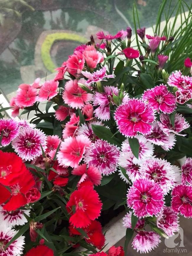 Vườn rau và hoa ở ban công với hơn 60 loại tươi tốt xanh mướt mắt của nữ dược sĩ ở Hà Nội - Ảnh 29.