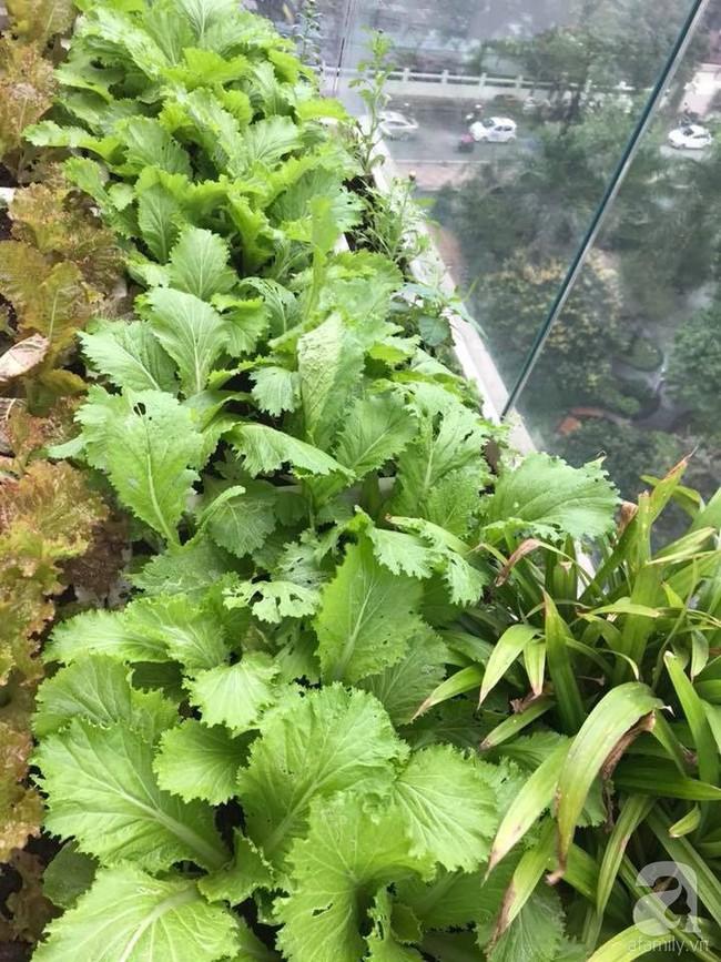 Vườn rau và hoa ở ban công với hơn 60 loại tươi tốt xanh mướt mắt của nữ dược sĩ ở Hà Nội - Ảnh 7.