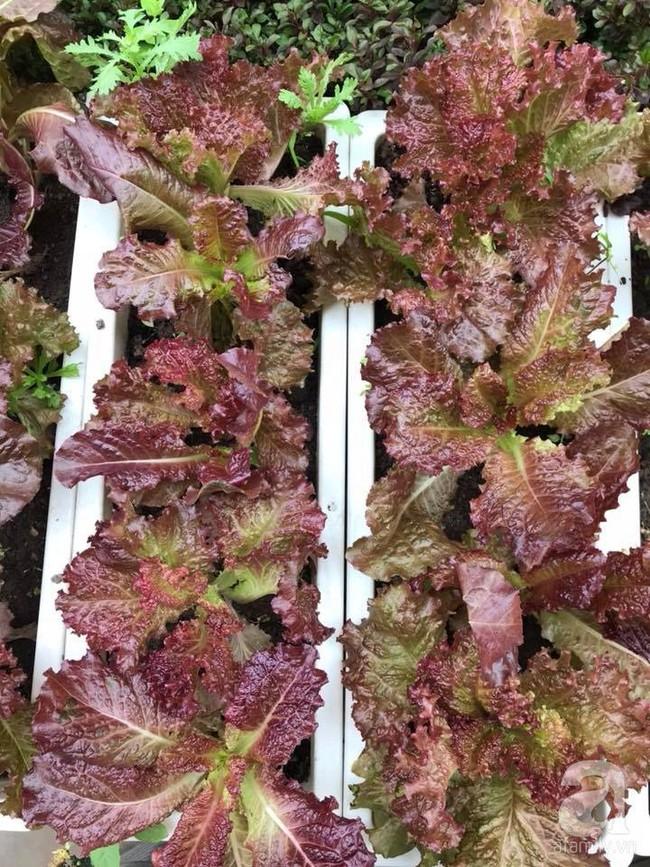 Vườn rau và hoa ở ban công với hơn 60 loại tươi tốt xanh mướt mắt của nữ dược sĩ ở Hà Nội - Ảnh 6.