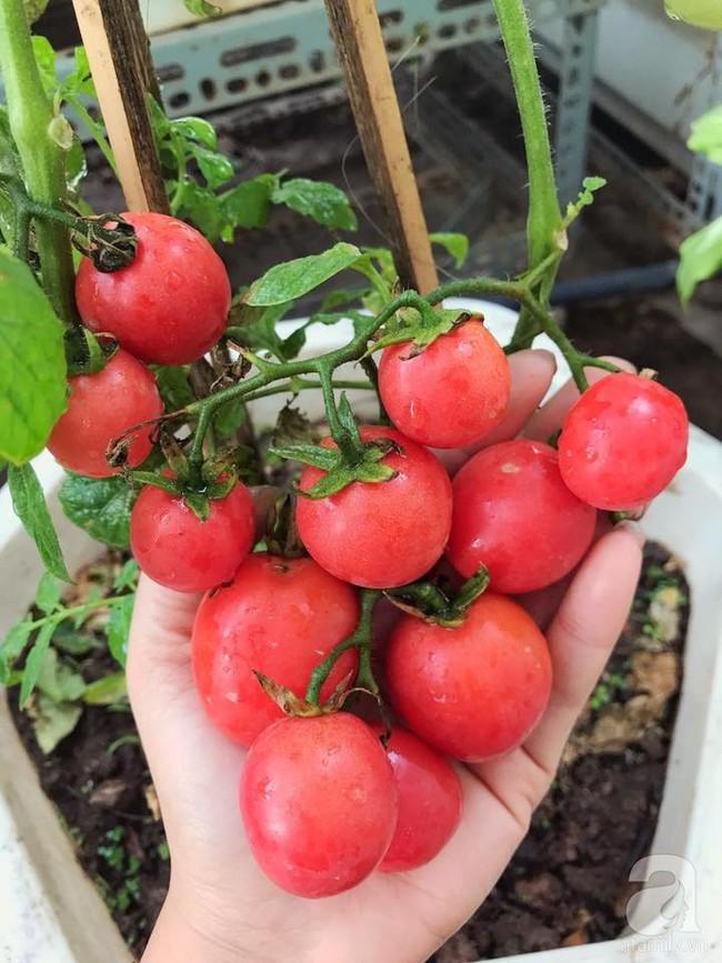 Vườn rau và hoa ở ban công với hơn 60 loại tươi tốt xanh mướt mắt của nữ dược sĩ ở Hà Nội - Ảnh 24.