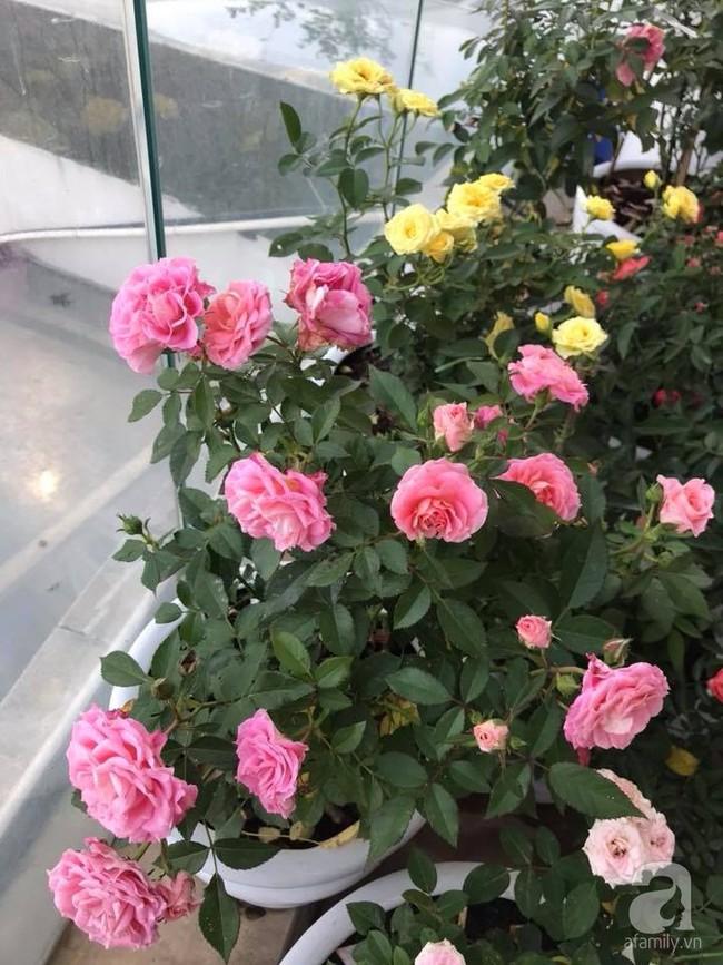 Vườn rau và hoa ở ban công với hơn 60 loại tươi tốt xanh mướt mắt của nữ dược sĩ ở Hà Nội - Ảnh 27.