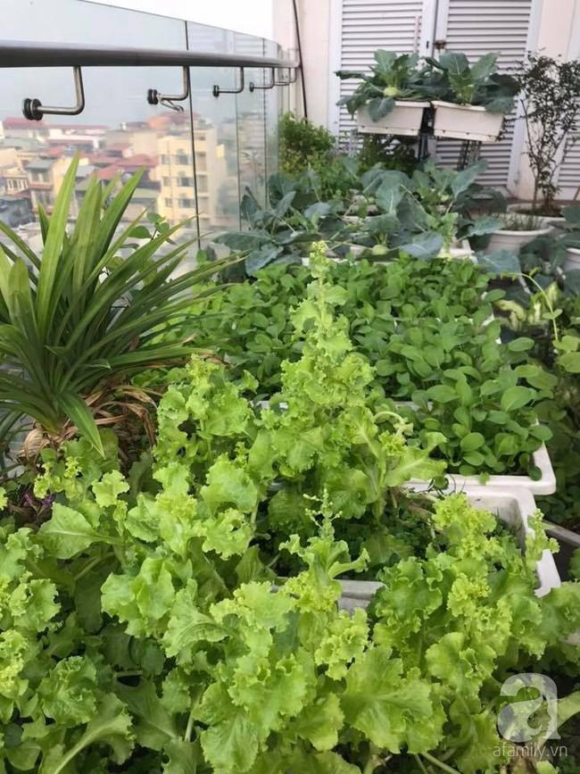 Vườn rau và hoa ở ban công với hơn 60 loại tươi tốt xanh mướt mắt của nữ dược sĩ ở Hà Nội - Ảnh 2.