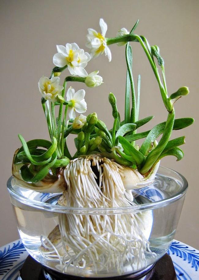 Những loại hoa vừa làm đẹp nhà vừa mang may mắn, tài lộc cho năm mới - Ảnh 9.
