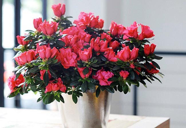 Những loại hoa vừa làm đẹp nhà vừa mang may mắn, tài lộc cho năm mới - Ảnh 1.
