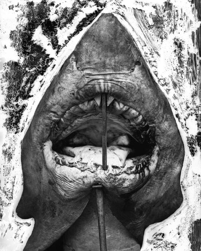 Lần đầu công bố ảnh những sinh vật to lớn kì bí ở Úc hơn 150 năm trước - Ảnh 8.