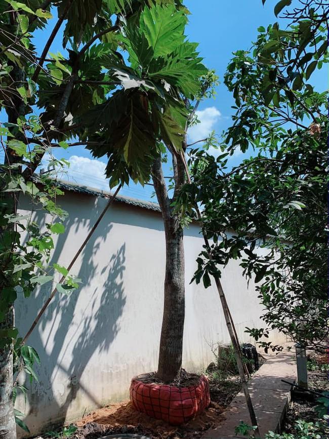 Nhà vườn bình yên và ngập tràn cây ăn quả của diễn viên Việt Trinh ở Bình Dương - Ảnh 10.