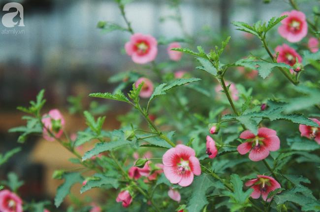Khung cảnh tấp nập chở Tết về nhà tại chợ cây cảnh Xuân Quan, gây chú ý nhất là loại hoa mới nổi này - Ảnh 11.