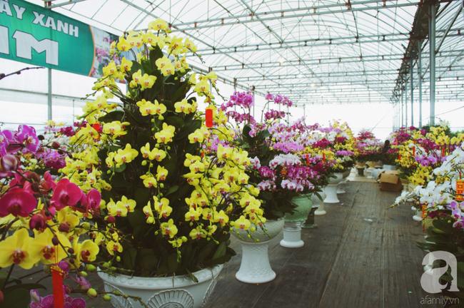 Khung cảnh tấp nập chở Tết về nhà tại chợ cây cảnh Xuân Quan, gây chú ý nhất là loại hoa mới nổi này - Ảnh 10.
