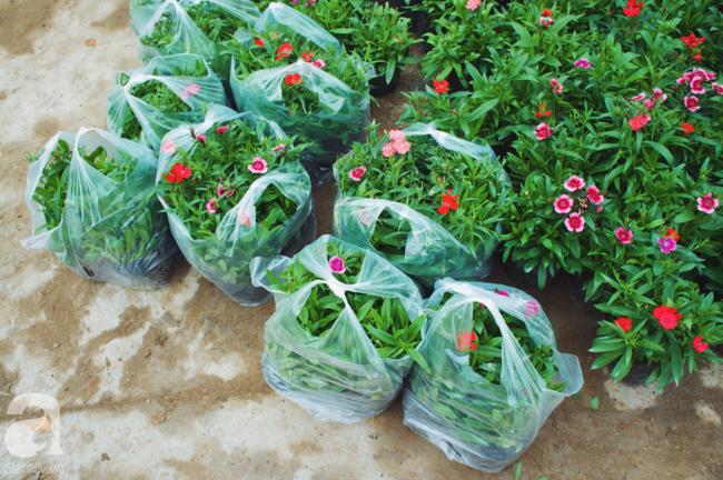 Khung cảnh tấp nập chở Tết về nhà tại chợ cây cảnh Xuân Quan, gây chú ý nhất là loại hoa mới nổi này - Ảnh 17.