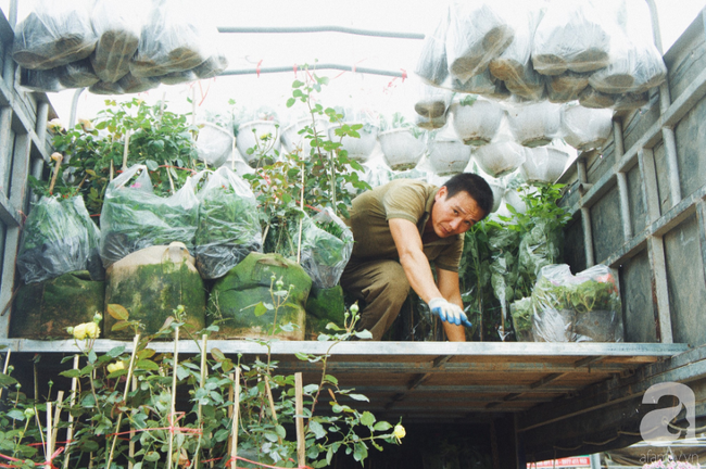 Khung cảnh tấp nập chở Tết về nhà tại chợ cây cảnh Xuân Quan, gây chú ý nhất là loại hoa mới nổi này - Ảnh 21.