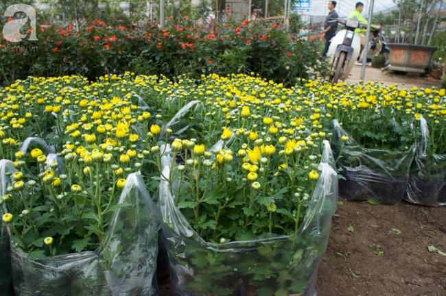 Khung cảnh tấp nập chở Tết về nhà tại chợ cây cảnh Xuân Quan, gây chú ý nhất là loại hoa mới nổi này - Ảnh 24.