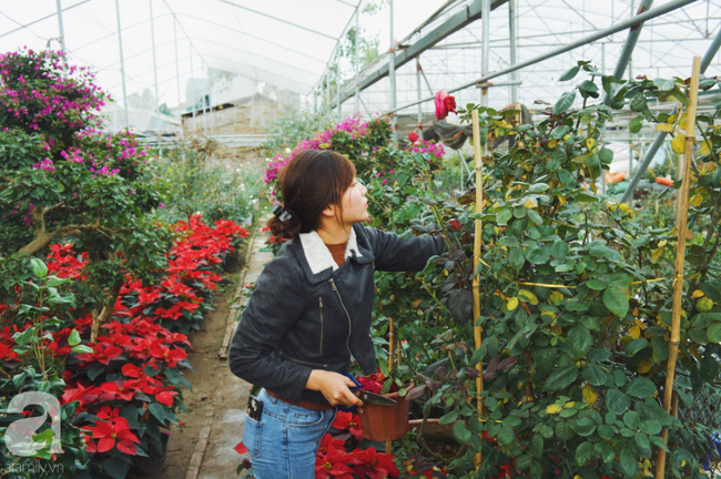 Khung cảnh tấp nập chở Tết về nhà tại chợ cây cảnh Xuân Quan, gây chú ý nhất là loại hoa mới nổi này - Ảnh 7.