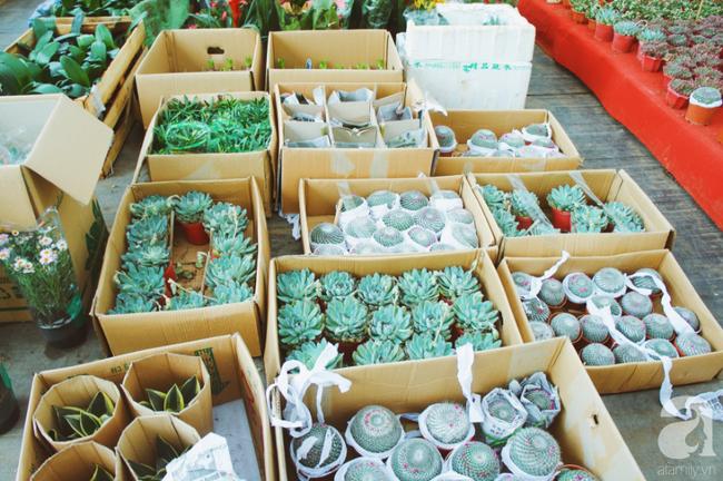 Khung cảnh tấp nập chở Tết về nhà tại chợ cây cảnh Xuân Quan, gây chú ý nhất là loại hoa mới nổi này - Ảnh 23.