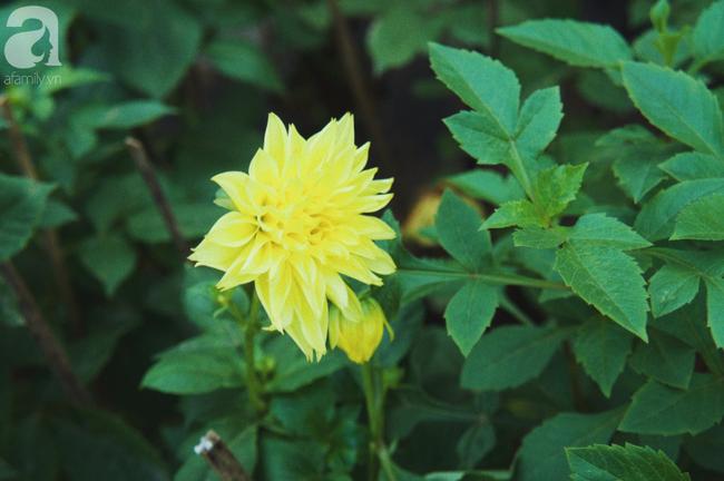 Khung cảnh tấp nập chở Tết về nhà tại chợ cây cảnh Xuân Quan, gây chú ý nhất là loại hoa mới nổi này - Ảnh 20.