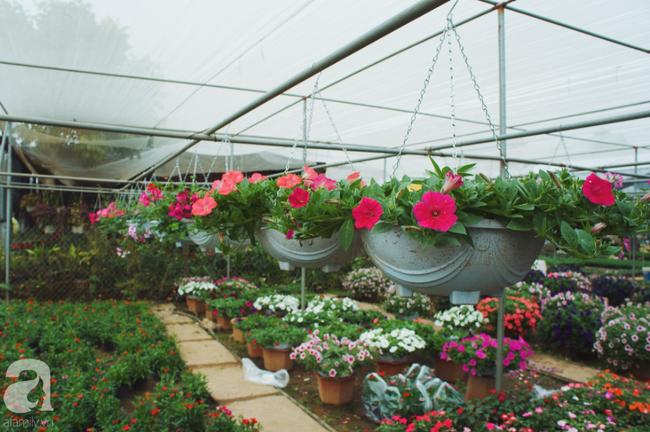 Khung cảnh tấp nập chở Tết về nhà tại chợ cây cảnh Xuân Quan, gây chú ý nhất là loại hoa mới nổi này - Ảnh 18.