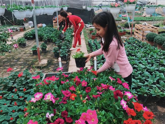 Khung cảnh tấp nập chở Tết về nhà tại chợ cây cảnh Xuân Quan, gây chú ý nhất là loại hoa mới nổi này - Ảnh 9.
