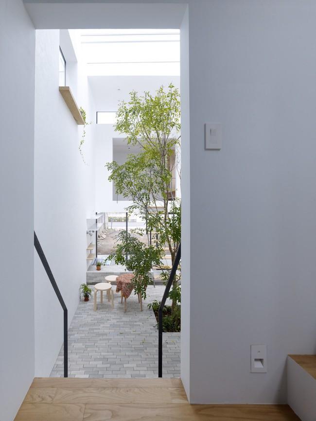 Dành hơn 1/10 diện tích làm giếng trời và sân vườn, ngôi nhà ống ở Nhật này được khen vừa đẹp, vừa lạ - Ảnh 2.
