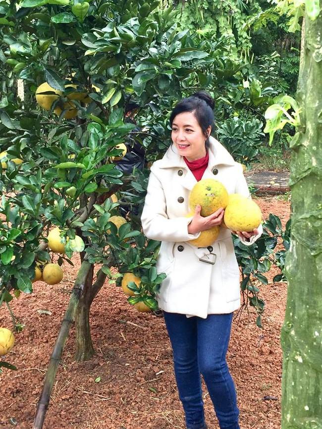 Sát Tết, NSƯT Chiều Xuân thu hoạch cả nghìn quả bưởi ở khu vườn của gia đình - Ảnh 8.