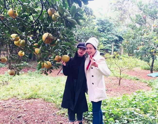Sát Tết, NSƯT Chiều Xuân thu hoạch cả nghìn quả bưởi ở khu vườn của gia đình - Ảnh 2.