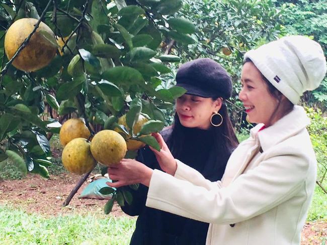 Sát Tết, NSƯT Chiều Xuân thu hoạch cả nghìn quả bưởi ở khu vườn của gia đình - Ảnh 14.
