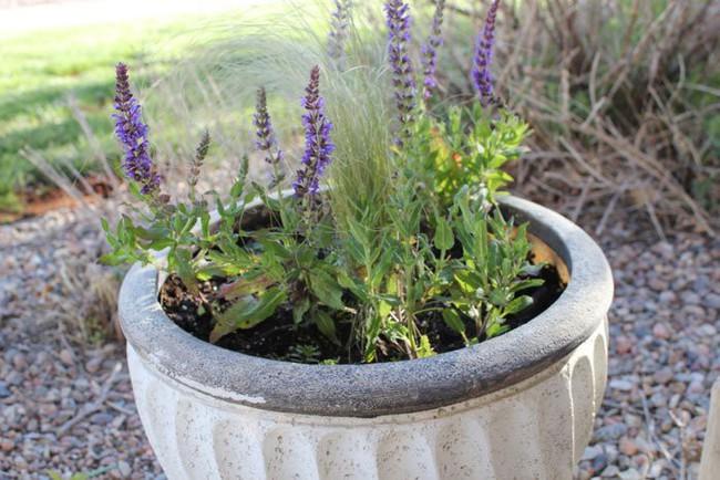 Mách bạn 10 loại cây trồng quanh nhà có khả năng xua đuổi kiến ba khoang hiệu quả - Ảnh 3.