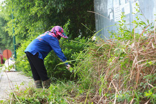 Khuyến cáo cách chống và đuổi kiến ba khoang tại nhà mà không cần dùng tới các hóa chất độc hại - Ảnh 3.