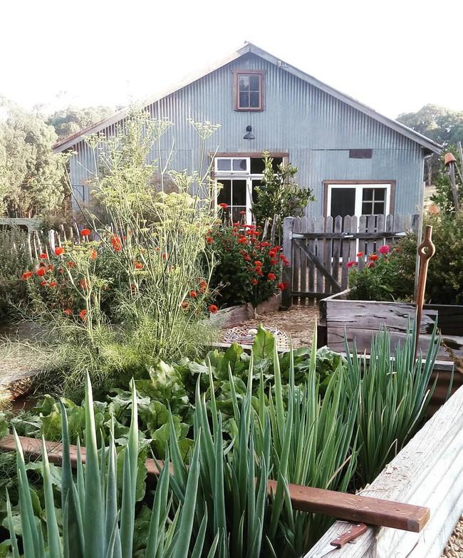 Gia đình 5 người quyết tâm không trở lại thành phố vì quá yêu thích cuộc sống nhà vườn ở nông thôn - Ảnh 1.