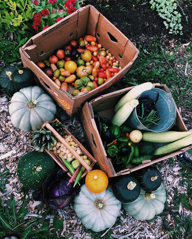 Ngắm khu vườn đẹp như tranh vẽ của cô gái hai mươi có niềm đam mê trồng trọt - Ảnh 11.