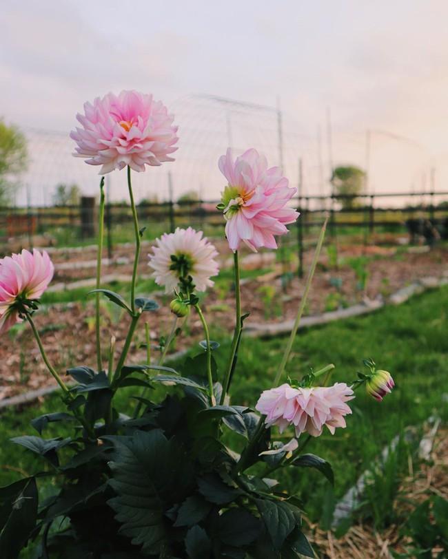 Ngắm khu vườn đẹp như tranh vẽ của cô gái hai mươi có niềm đam mê trồng trọt - Ảnh 9.