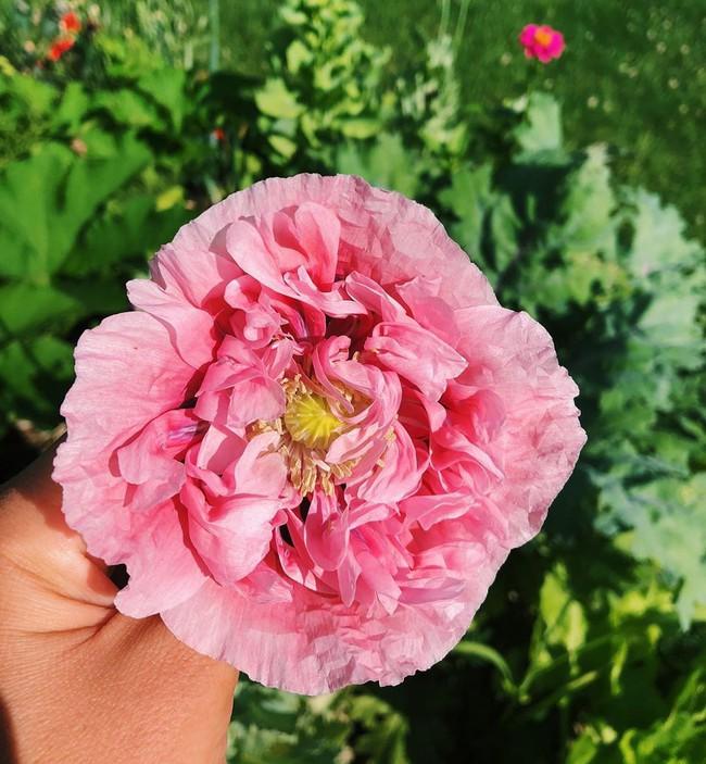 Ngắm khu vườn đẹp như tranh vẽ của cô gái hai mươi có niềm đam mê trồng trọt - Ảnh 5.