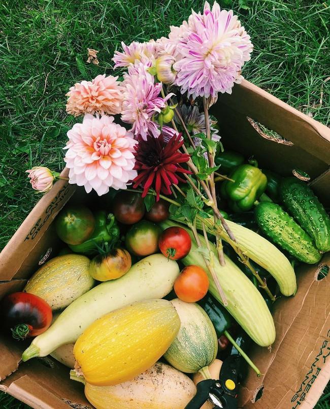 Ngắm khu vườn đẹp như tranh vẽ của cô gái hai mươi có niềm đam mê trồng trọt - Ảnh 3.