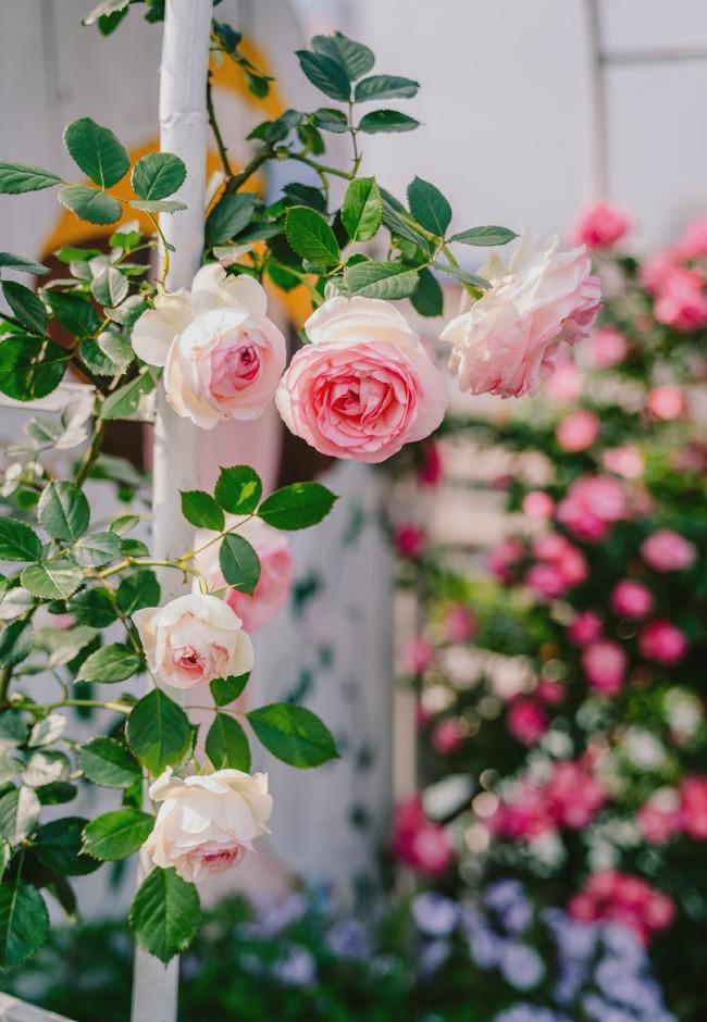 Tận dụng mái nhà bỏ hoang, người phụ nữ yêu hoa biến không gian thành khu vườn dịu dàng sắc hoa - Ảnh 11.