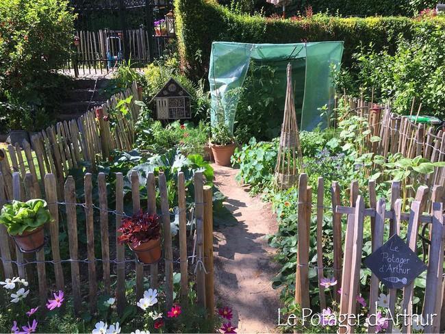 Vườn rau nhỏ đủ loại tươi tốt của chàng trai 18 tuổi đam mê trồng trọt - Ảnh 15.