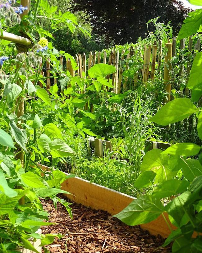 Vườn rau nhỏ đủ loại tươi tốt của chàng trai 18 tuổi đam mê trồng trọt - Ảnh 13.