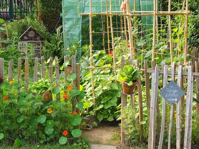 Vườn rau nhỏ đủ loại tươi tốt của chàng trai 18 tuổi đam mê trồng trọt - Ảnh 10.