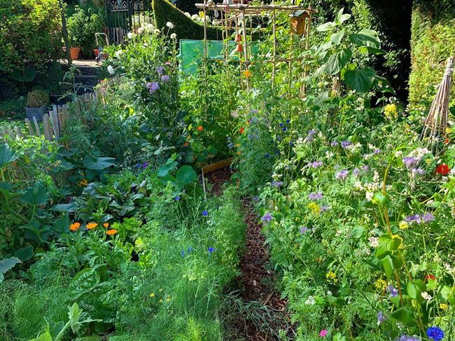 Vườn rau nhỏ đủ loại tươi tốt của chàng trai 18 tuổi đam mê trồng trọt - Ảnh 9.