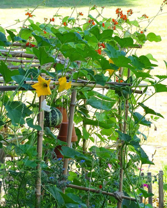 Vườn rau nhỏ đủ loại tươi tốt của chàng trai 18 tuổi đam mê trồng trọt - Ảnh 7.