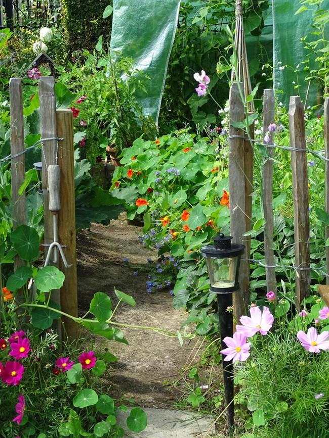 Vườn rau nhỏ đủ loại tươi tốt của chàng trai 18 tuổi đam mê trồng trọt - Ảnh 3.