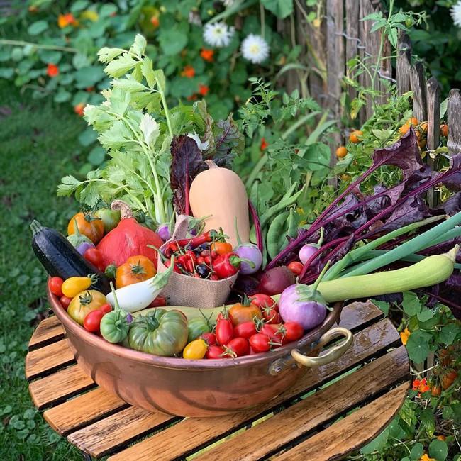 Vườn rau nhỏ đủ loại tươi tốt của chàng trai 18 tuổi đam mê trồng trọt - Ảnh 2.