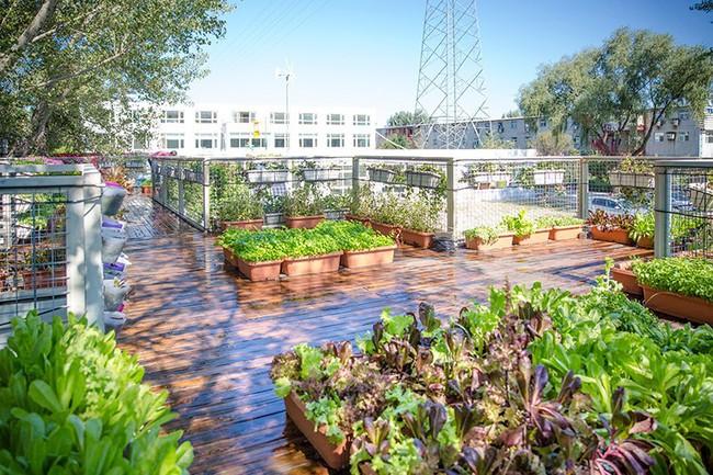 """Người đàn ông 57 tuổi vừa có sự nghiệp vừa tạo lập vườn rau xanh ở """"biệt thự"""" container tặng vợ - Ảnh 16."""