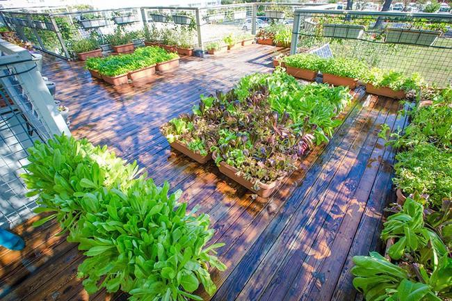 """Người đàn ông 57 tuổi vừa có sự nghiệp vừa tạo lập vườn rau xanh ở """"biệt thự"""" container tặng vợ - Ảnh 15."""