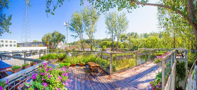 """Người đàn ông 57 tuổi vừa có sự nghiệp vừa tạo lập vườn rau xanh ở """"biệt thự"""" container tặng vợ - Ảnh 14."""