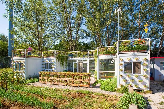 """Người đàn ông 57 tuổi vừa có sự nghiệp vừa tạo lập vườn rau xanh ở """"biệt thự"""" container tặng vợ - Ảnh 8."""