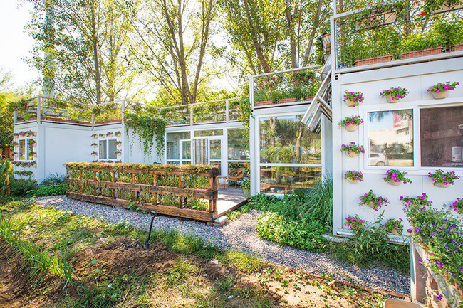 """Người đàn ông 57 tuổi vừa có sự nghiệp vừa tạo lập vườn rau xanh ở """"biệt thự"""" container tặng vợ - Ảnh 7."""