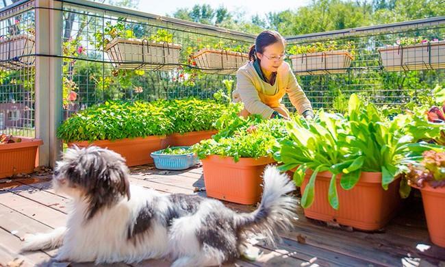 """Người đàn ông 57 tuổi vừa có sự nghiệp vừa tạo lập vườn rau xanh ở """"biệt thự"""" container tặng vợ - Ảnh 2."""